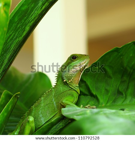 Green chameleon on the tree. - stock photo