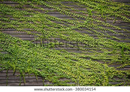 how to stop moss growing on roof tiles