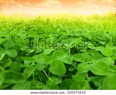 green clover field - stock photo