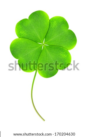 Green clover leaf isolated on white background - stock photo