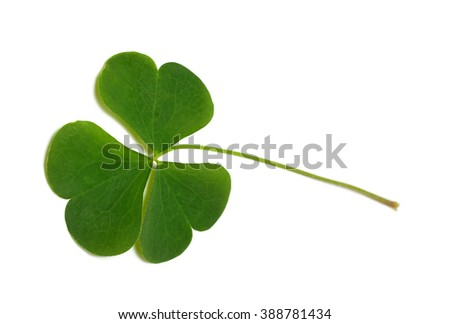 Green clover leaf isolated on white background. Close-up view. - stock photo