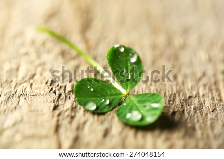 Green clover leaf with drops on wooden background - stock photo