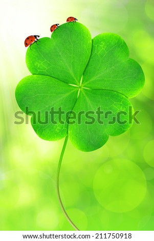 Green clover leaf with ladybugs - stock photo