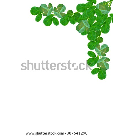 Green clover leaves on a background summer landscape. St.Patrick 's Day - stock photo