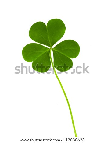 green clover symbol of a St Patrick day isolated on white background - stock photo