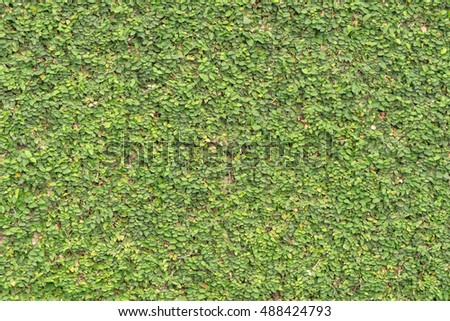 Green Coat button wall background texture