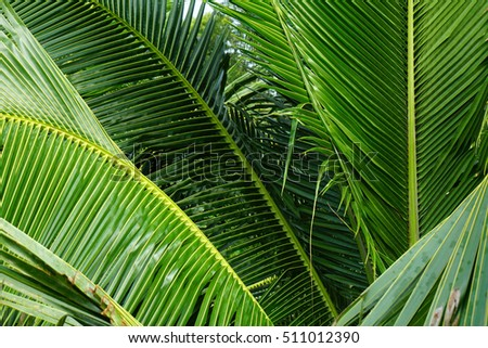 green coconut leaf