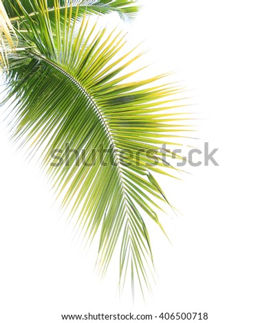 Green coconut leaf frame on white background - stock photo