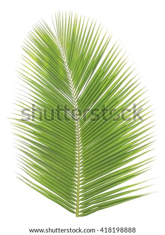 Green coconut leaves frame isolated on white background