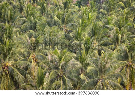 Green coconut trees background, top view in island Koh Samui, Thailand - stock photo
