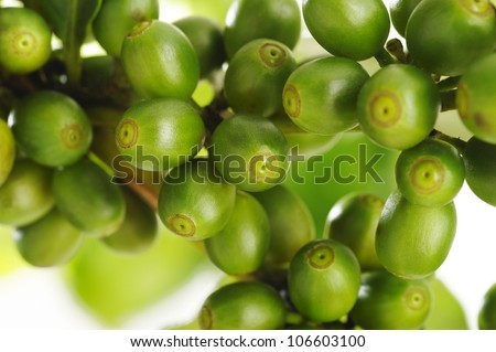 Green coffee beans - stock photo