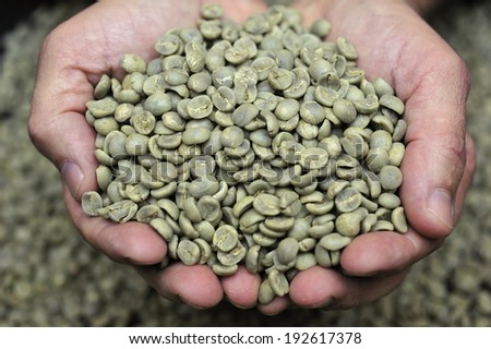 Green coffee beans in farmer�s hand - stock photo