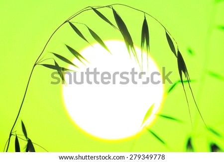 Green colored image with oat twig over great sun of dawn - stock photo