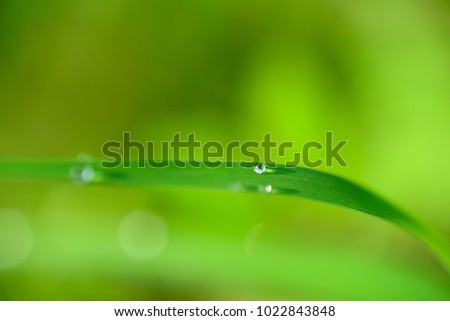 Green Colour Background of grass with Dew