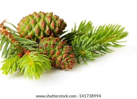 Green cones and fir tree isolated on white - stock photo