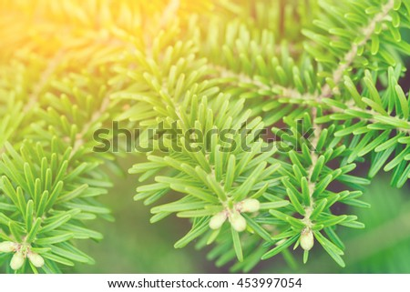 Green conifer branch in the sunlight - stock photo