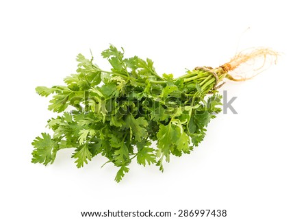 green coriander vegetables isolated on white background - stock photo