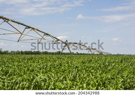 Green corn with irrigation system growing in the field - stock photo
