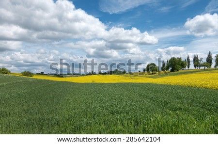 Green cornfields and yellow blooming rape fields in a rural landscape. To this a sky with impressive cloud formation.  - stock photo