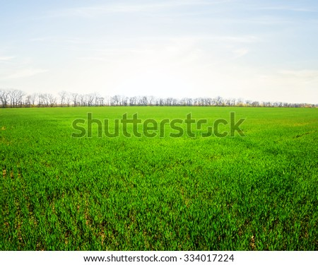 green countryside landscape at the early morning - stock photo