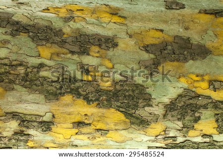 Green cracked tree bark texture closeup - stock photo