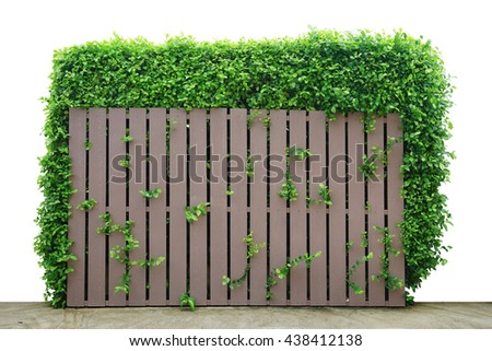Green creeper plant on a wooden fence.                     - stock photo