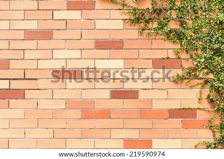 green creeper plant on brick wall - stock photo