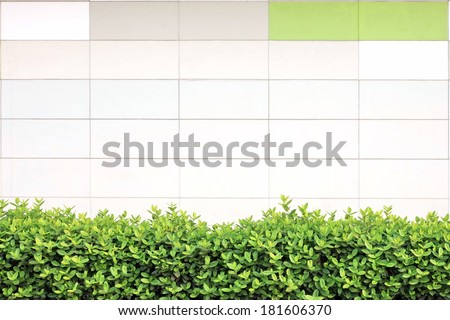 Green creeper plant on white painted concrete block wall background texture - stock photo