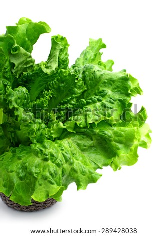 Green curly lettuce isolated on white background