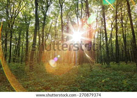Green deciduous forest on a sunny day. - stock photo