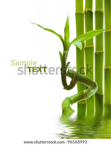 green decoratice bamboo in water