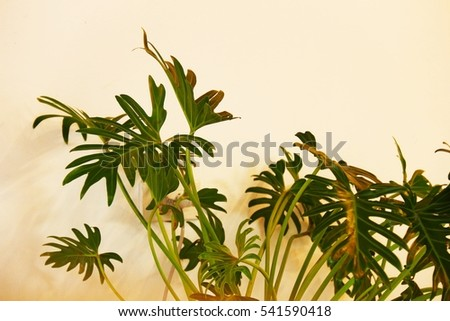 Green decoration plants with white wall behind