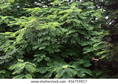 Green Dense Foliage Background, Nature Theme