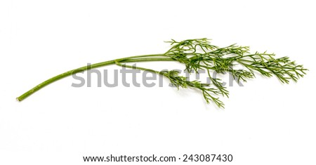 green dill on a white background