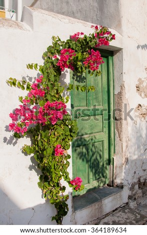green door on an old whitewashed wall and a branch with flowers. Background.