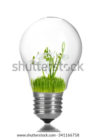 Green eco energy concept. Flowers growing inside light bulb, isolated on white - stock photo