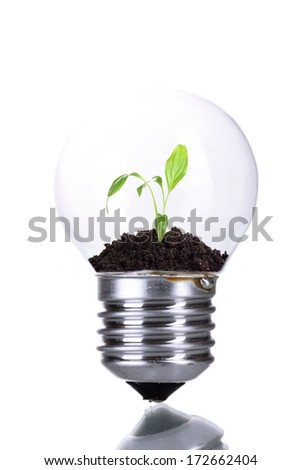 Green eco energy concept. Plant growing inside light bulb, isolated on white - stock photo