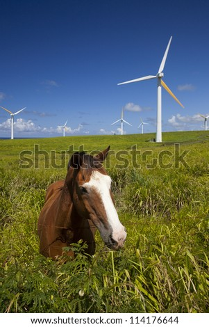 Green ecology, wind power turbines in Hawaii and horse - stock photo