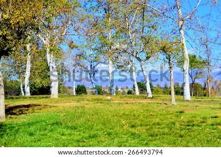 Green edge in Balboa Lake Park. Encino, California. - stock photo