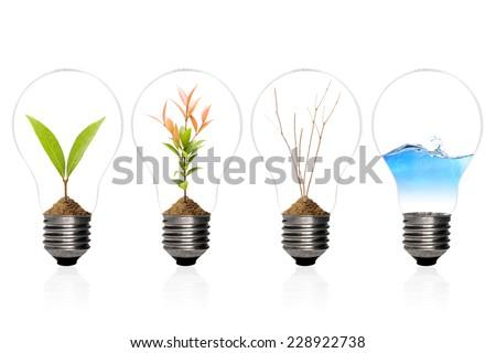 Green energy concept - sprout tree,tree,water,dry tree branch in light bulb,isolated on white with clipping path - stock photo