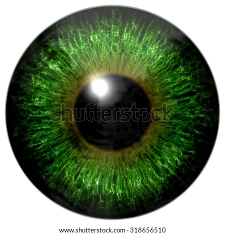 Green Eyes Stock Photos, Royalty-Free Images & Vectors - Shutterstock Brown Eyes Iris