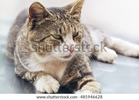 Green eyed cat on a light background