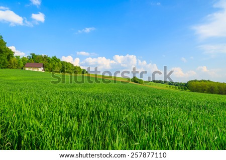 Green farming field with house in background in countryside spring landscape, Burgenland, Austria - stock photo