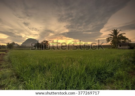 Green farmland paddy field landscape with sunrise in Malacca, Malaysia
