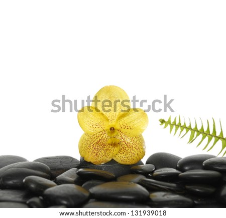 green fern and yellow flower on pebbles - stock photo