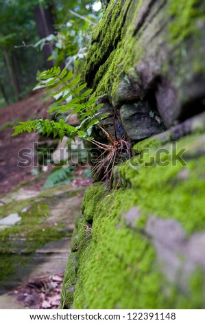 green fern growing on a rock