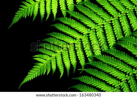 Green Fern in tropical forests. - stock photo