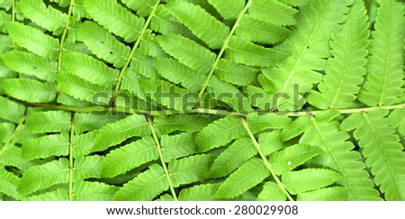 Green fern leaf background banner style  - stock photo