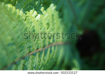 Green fern leaf selected focus