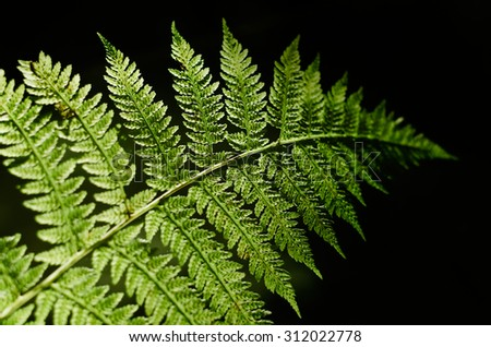 Green fern leaf. Sunny day in the woods. Contrast light